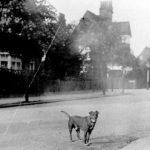 Bedford Road 1904