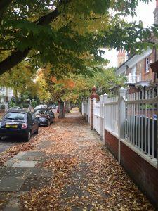leaves-on-path